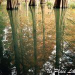 篠栗九大の森がインスタで話題沸騰中!神秘的すぎるその景色とは?