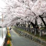 天神中央公園桜まつり2018の花見の予約方法や料金!イベント期間は?